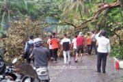 Akibat Pohon Tumbang, Akses Jalan Sempat Lumpuh di Nagari Gurun Panjang Pessel