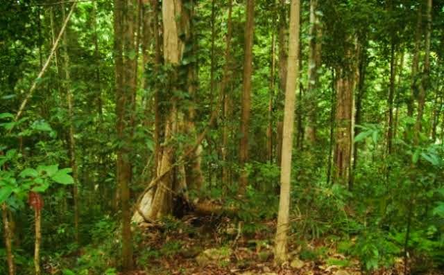 Tak Kunjung Pulang, Tujuh Warga Pasaman Dilaporkan Hilang di Hutan