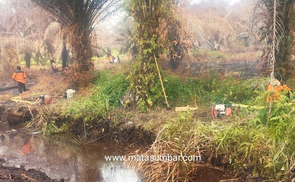 Tim Gabungan, Akhirnya Berhasil Padamkan Kebakaran Lahan Sawit di Pasbar