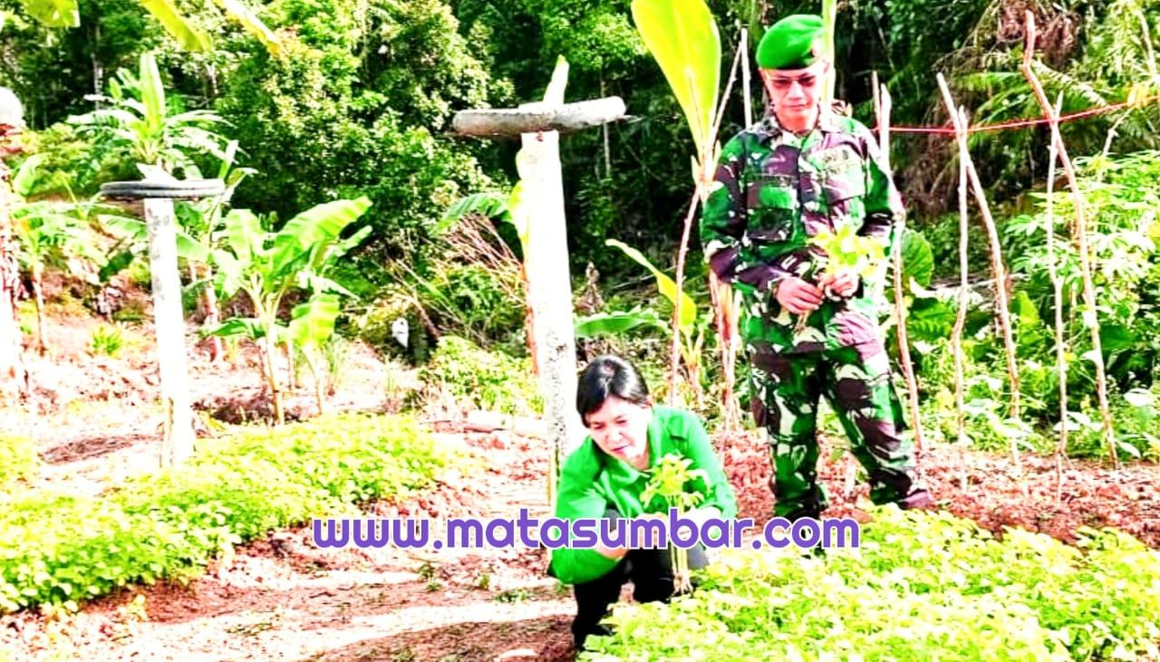 Dandim 0319/Mentawai Bersama Ketua Persit Kunjungi Lahan Pertanian Prajurit