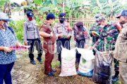 Penyerahan Bantuan Bibit dan Pupuk di Dua Desa Didampingi Babinsa Sikakap
