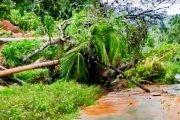 Badan Jalan di Matorobibit Goiso'oinan Tertutup Pohon Tumbang Akibat Longsor