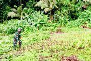 Babinsa Sikakap Tinjau Bibit Kacang Ijo di Lahan Warga Dusun Kosai Bagat Sagai