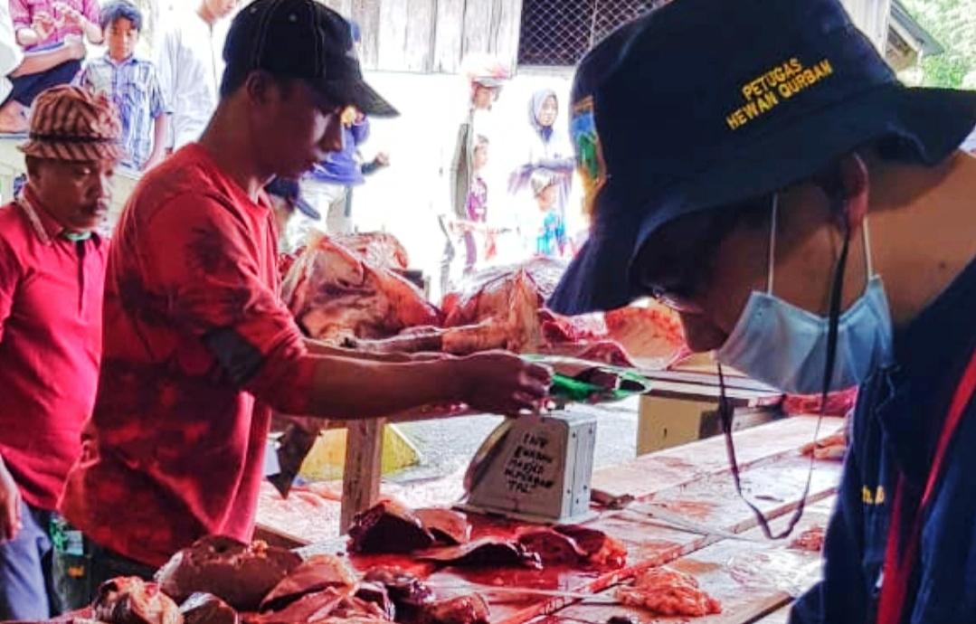 Sebelum Pemotongan, 528 Ekor Hewan Qurban di Padang Panjang Sudah Dilakukan Pemeriksaan