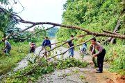 Jalan di Pogari Sempat Terputus Akibat Pohon Tumbang, Sekarang Sudah Bisa di Lewati