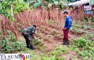 Tingkatkan Hasil Pertanian, Babinramil Sikakap Motivasi Petani