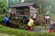 Polsek Pasaman Laksanakan Gotong Royong di Nagari Persiapan Pujorahayu