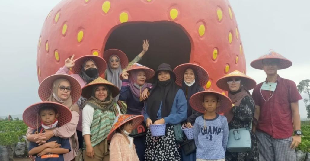Manfaatkan Waktu Bersama Keluarga Nikmati Lokasi Strawberry Organik di Alahan Panjang
