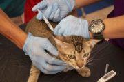 Tak Hanya Orang, Hewan di Yogyakarta Mulai Pekan Depan di Vaksin