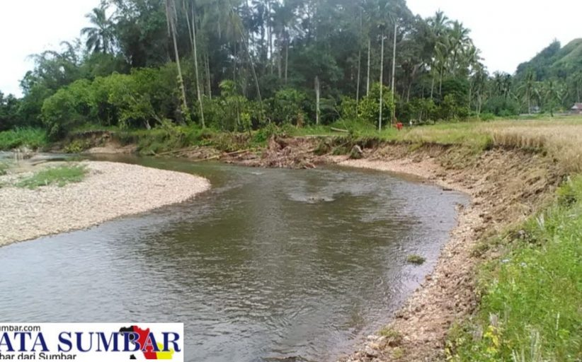 Keluhan Soal Sawah Sering Terban Masuk Sungai, Masyarakat Akan Layangkan Surat ke Bupati 50 Kota