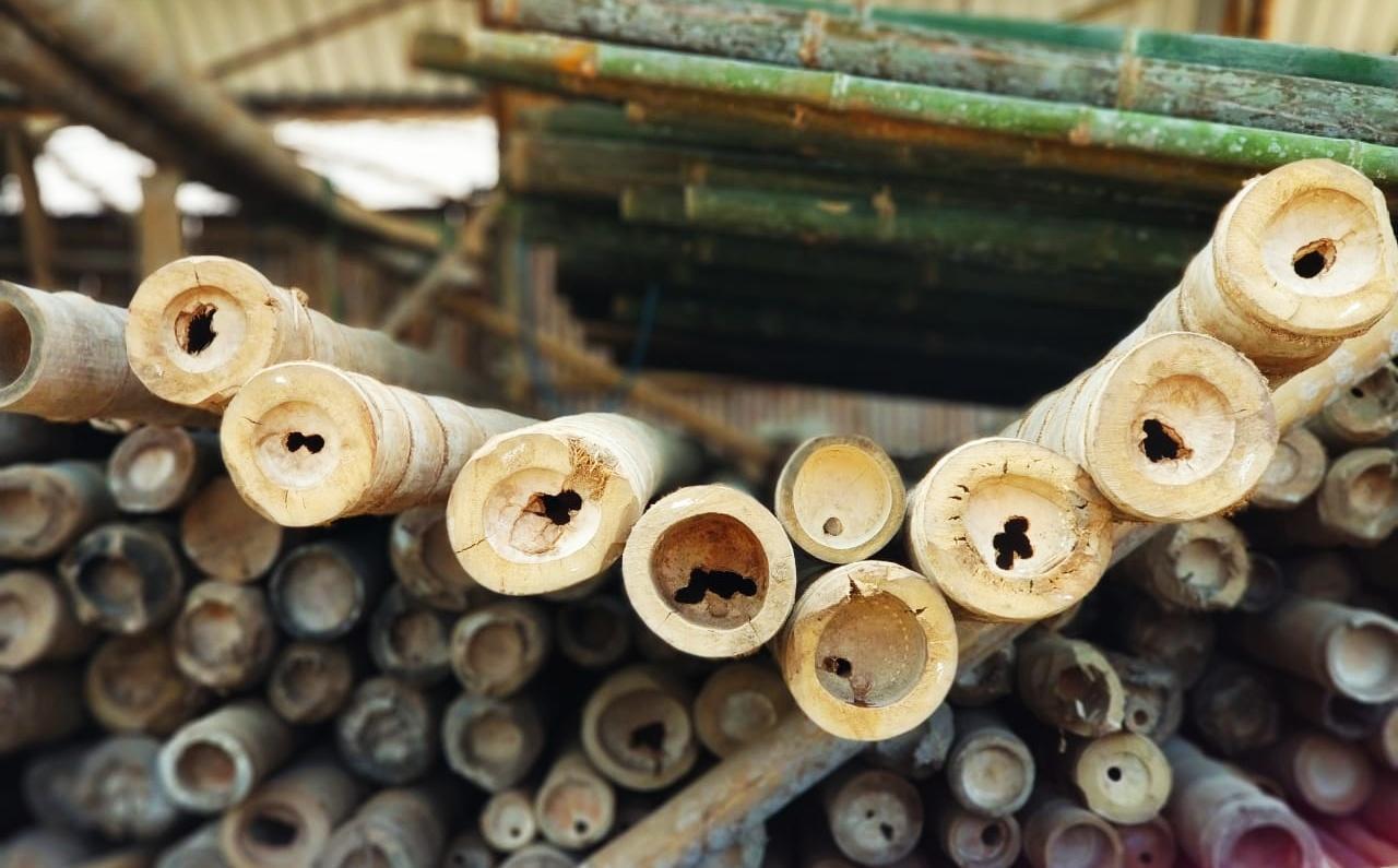 Listrik Biomassa Berbahan Baku Bambu, Mentawai Terang Perekonomian Masyarakat Berkembang