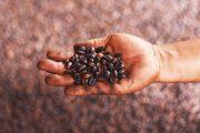 Otentisitas Rasa dan Aroma Kopi Pengilingan Tradisional Dari Padang Panjang