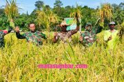 Ketahanan Pangan Kodim 0319/Mentawai Menuai Hasil, Kelompok Tani Arau Desa Goiso'oinan Panen Raya