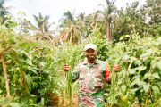Wujudkan Ketahanan Pangan, Babinsa Sikakap Tinjau Lahan Perkebunan di Dusun Mabolak