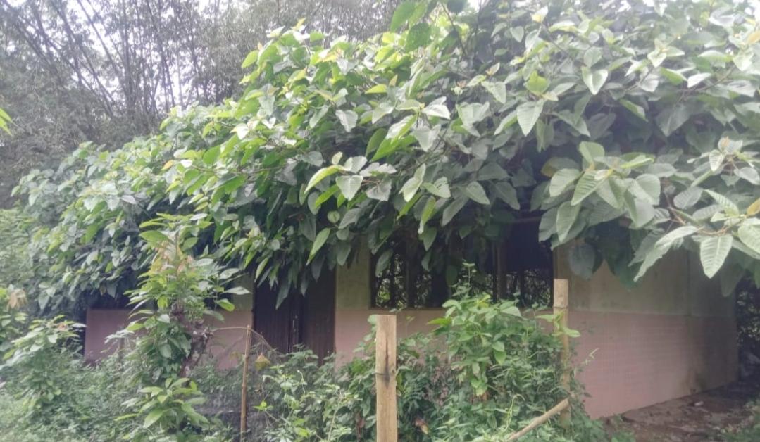 Miiris, Rumah Potong Hewan di Limbanang Tak Terawat Hingga di Hiasi Semak Belukar